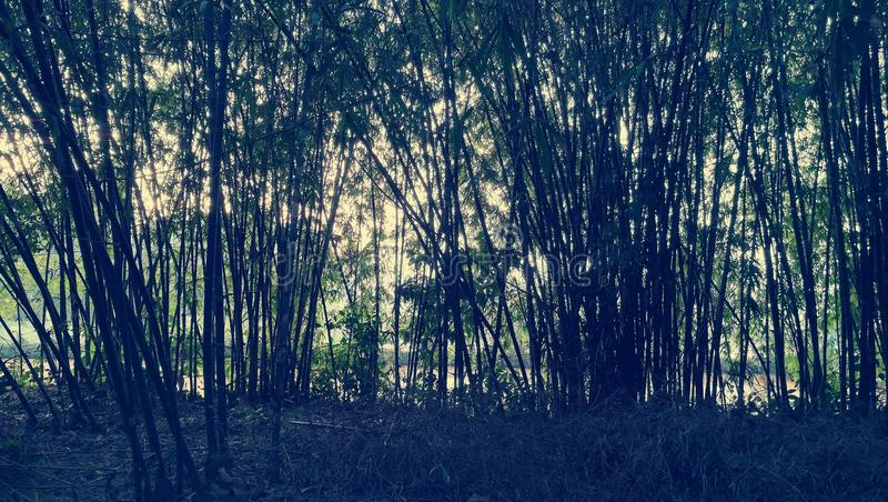 Κήπος μπαμπού στοκ φωτογραφίες