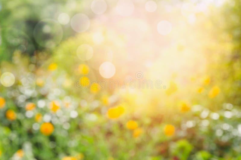 Κήπος λουλουδιών ή πάρκο, θολωμένο υπόβαθρο φύσης στοκ εικόνες