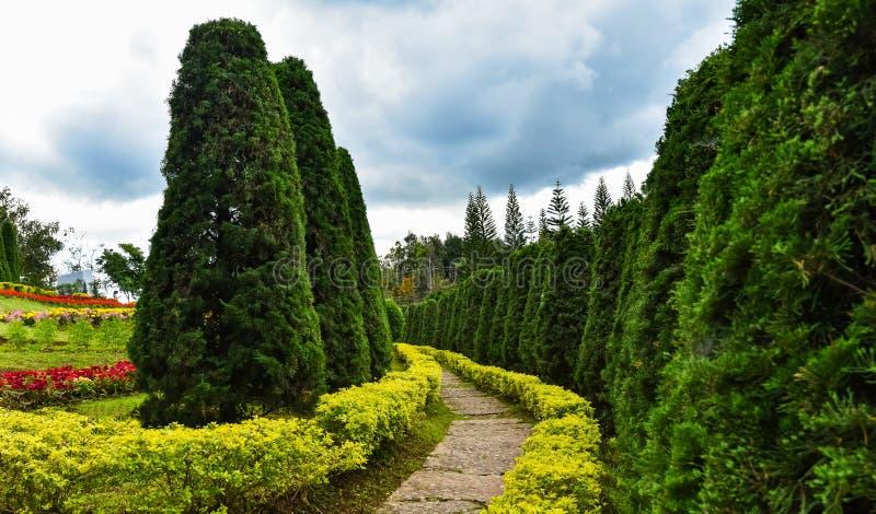 Κήπος λουλουδιών με το πεύκο στοκ φωτογραφίες με δικαίωμα ελεύθερης χρήσης