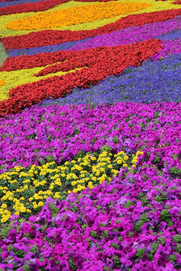 Κήπος λουλουδιών στο epcot στοκ εικόνα με δικαίωμα ελεύθερης χρήσης