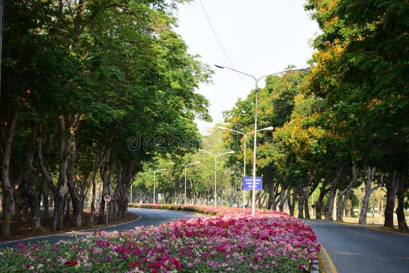 Κήπος & λουλούδι στοκ εικόνα