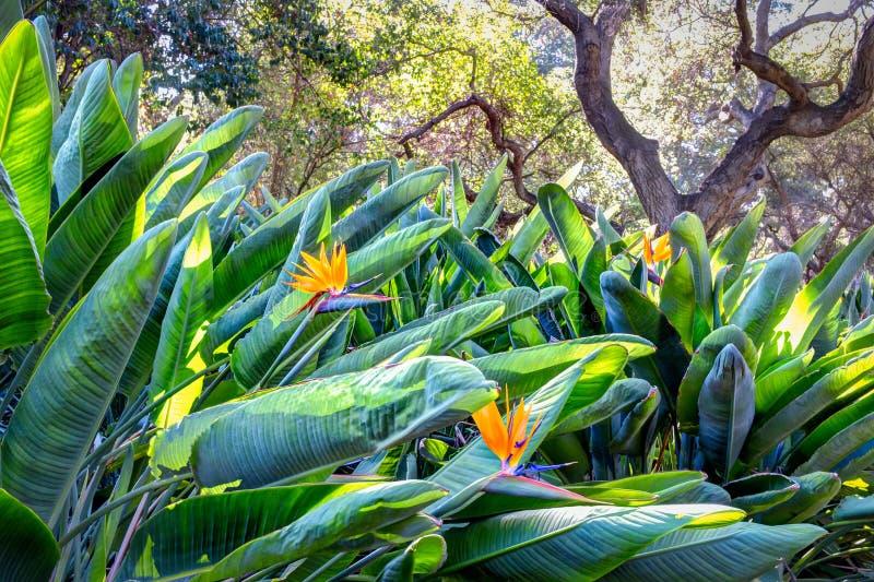 Κήπος πουλιών του παραδείσου στοκ εικόνα
