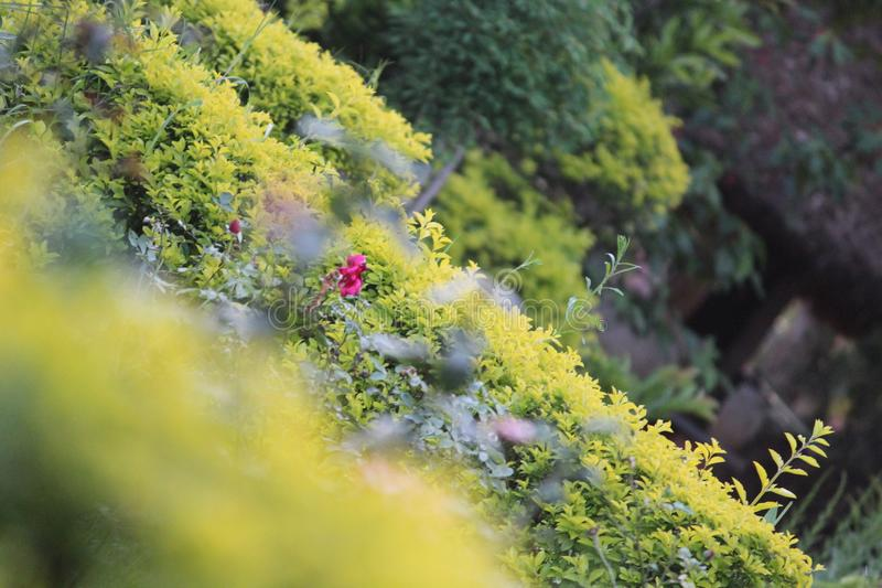 κήπος πράσινος στοκ εικόνα με δικαίωμα ελεύθερης χρήσης