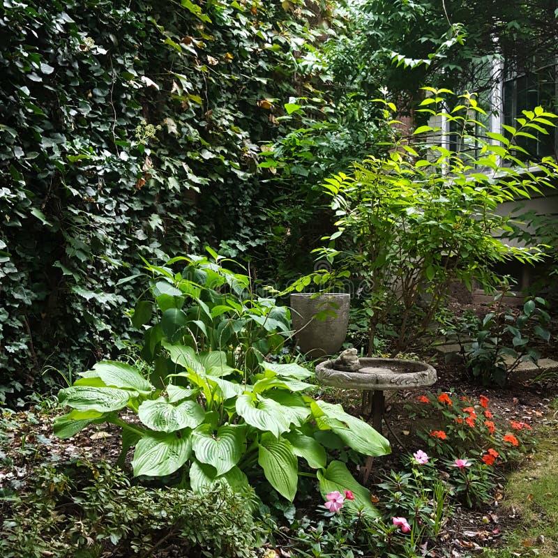 κήπος πράσινος στοκ φωτογραφία με δικαίωμα ελεύθερης χρήσης