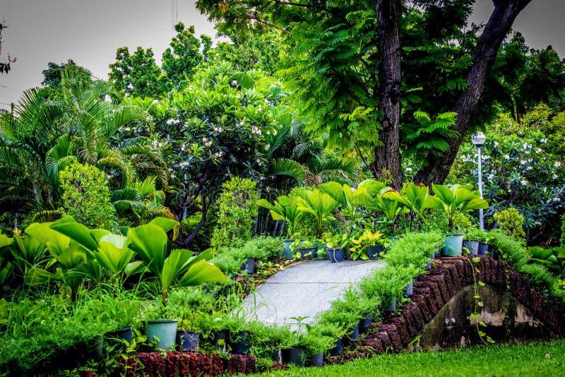Κήπος στην Ταϊλάνδη Chatuchak 40 στοκ εικόνες