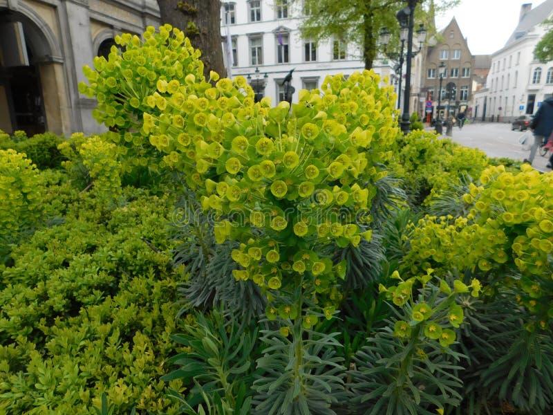 Κήπος στη Μπρυζ στοκ φωτογραφίες