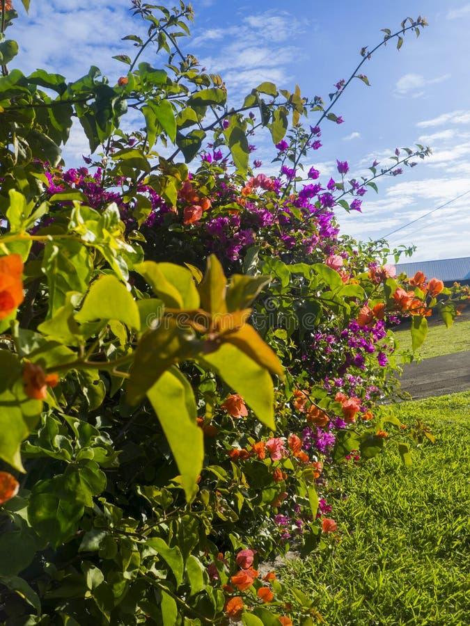 Κήπος στο νησί συγκέντρωσης στοκ εικόνες