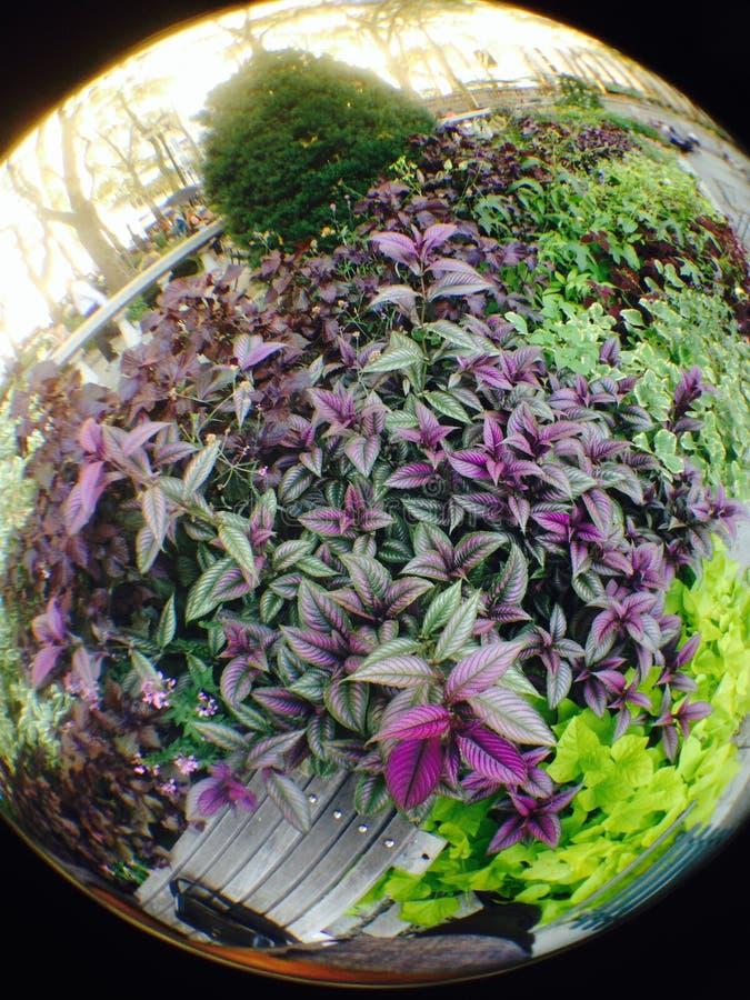 κήπος της Ντάρμσταντ στοκ εικόνες