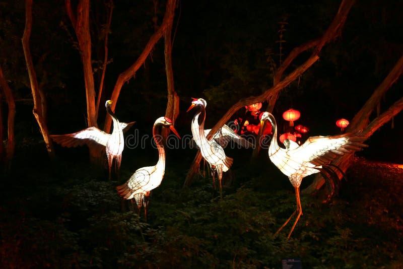 Κήπος του θεάματος φω'των στο βοτανικό κήπο του Μόντρεαλ στοκ φωτογραφίες με δικαίωμα ελεύθερης χρήσης