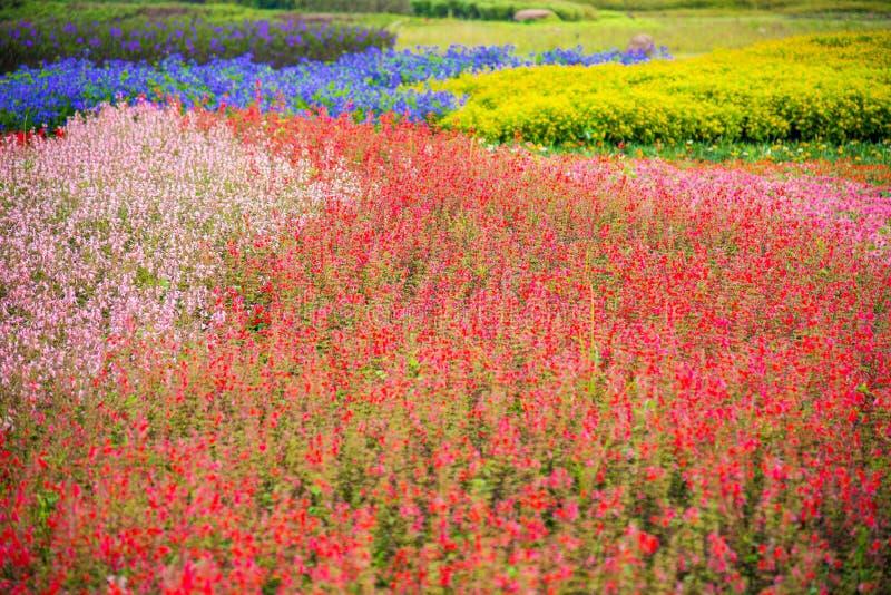 Κήπος του λουλουδιού στοκ φωτογραφία με δικαίωμα ελεύθερης χρήσης