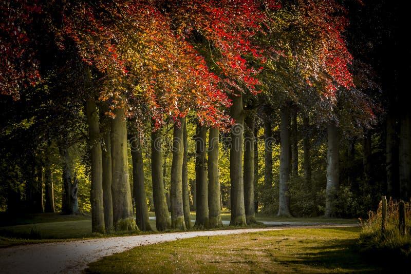 Κήπος του Castle στις Κάτω Χώρες στοκ φωτογραφία