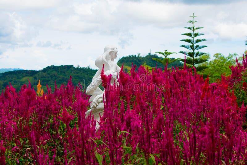 Κήπος των φρέσκων και ανθίζοντας κόκκινων λουλουδιών Cockscomb με ένα άσπρο πέτρινο άγαλμα όμορφες γυναίκες στοκ εικόνα