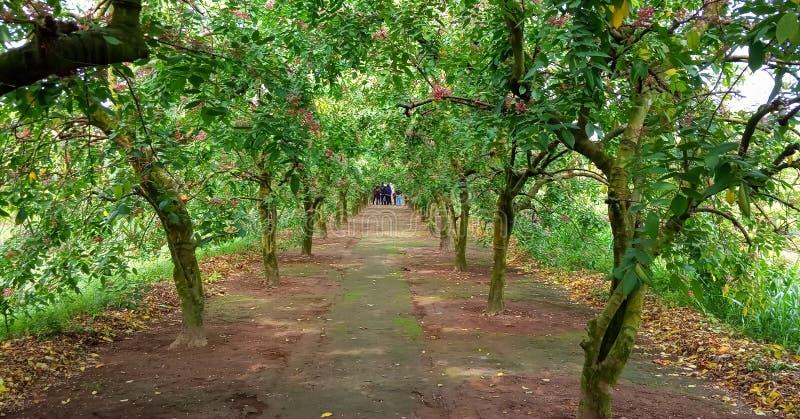 Κήπος φρούτων αστεριών στοκ εικόνα