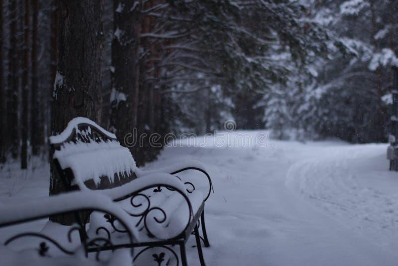 Κήπος χιονιού στοκ φωτογραφία με δικαίωμα ελεύθερης χρήσης