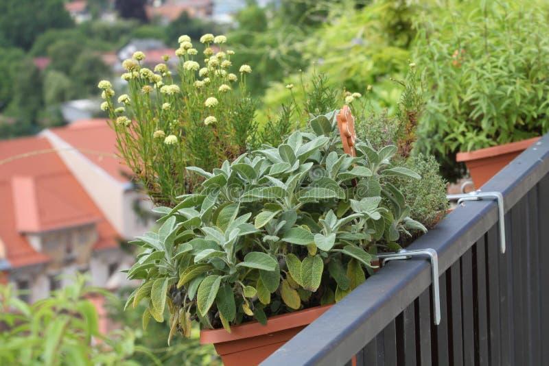 Κήπος χορταριών μπαλκονιών μέσα στα δοχεία στοκ φωτογραφία με δικαίωμα ελεύθερης χρήσης
