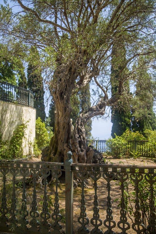 Κήπος Achilleion, Κέρκυρα, Ελλάδα στοκ φωτογραφίες με δικαίωμα ελεύθερης χρήσης