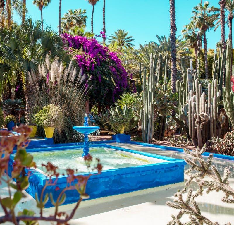 Κήπος Majorelle στο Μαρακές, Μαρόκο στοκ φωτογραφία με δικαίωμα ελεύθερης χρήσης