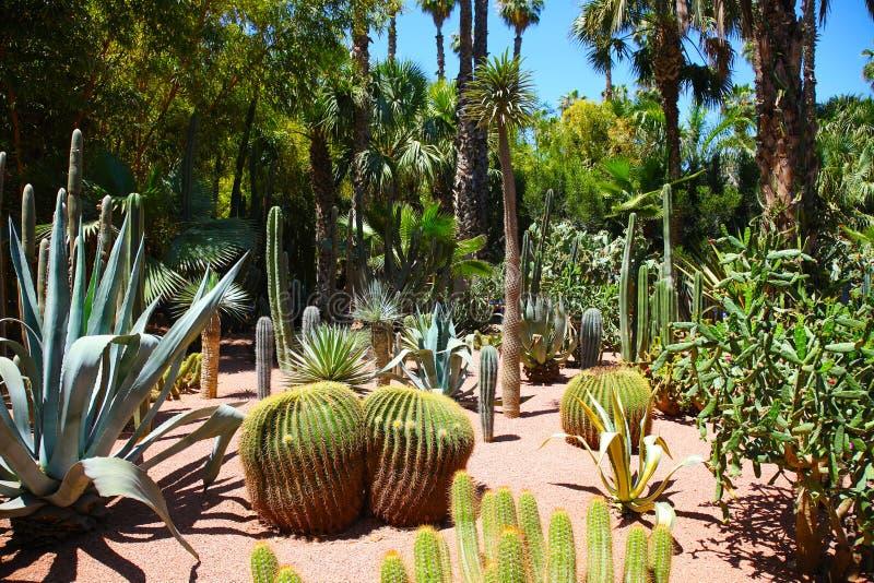 κήπος majorelle στοκ εικόνα