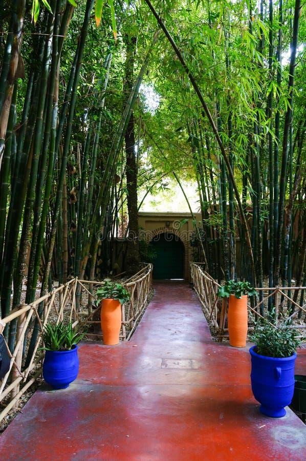 Κήπος Majorelle Jardin στο Μαρακές, Μαρόκο στοκ φωτογραφία με δικαίωμα ελεύθερης χρήσης