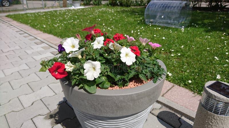 Κήπος Mom στοκ εικόνες