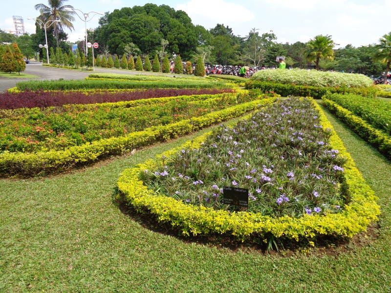 Κήπων λουλουδιών στην υγεία στοκ εικόνα