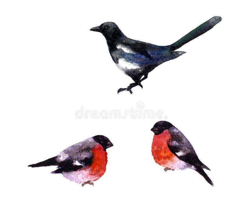 Κίσσα και bullfinches διανυσματική απεικόνιση