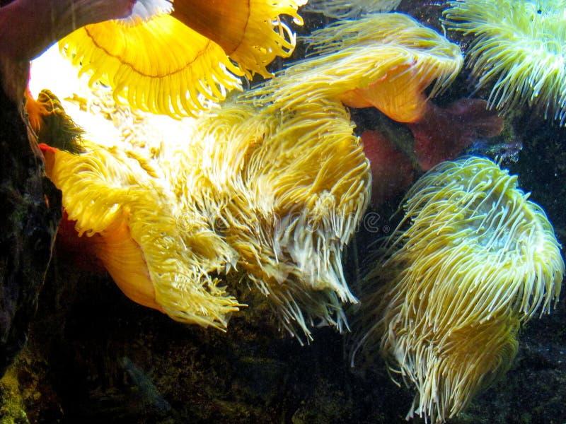 Κίτρινα άλγη στοκ εικόνα με δικαίωμα ελεύθερης χρήσης