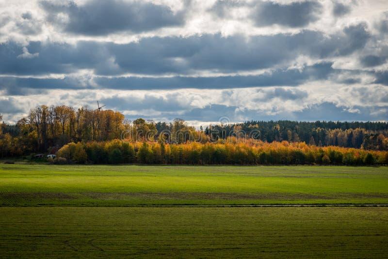 Κίτρινα δέντρα σημύδων κατά τη διάρκεια του φθινοπώρου στοκ φωτογραφία με δικαίωμα ελεύθερης χρήσης