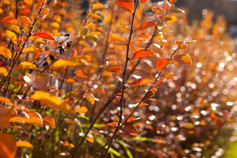 κίτρινα και κόκκινα φύλλα φθινοπώρου ενάντια στο μπλε ουρανό στοκ εικόνες με δικαίωμα ελεύθερης χρήσης