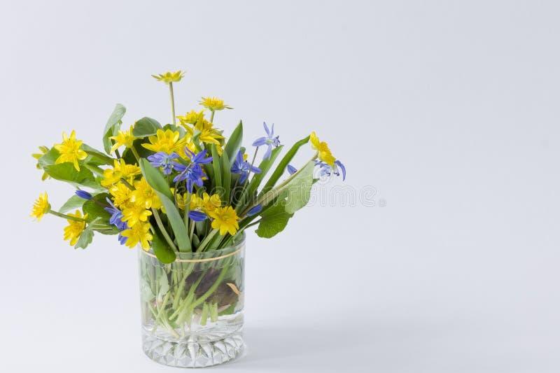 Κίτρινα και μπλε primroses άνοιξη σε ένα διαφανές γυαλί σε ένα lig στοκ εικόνες