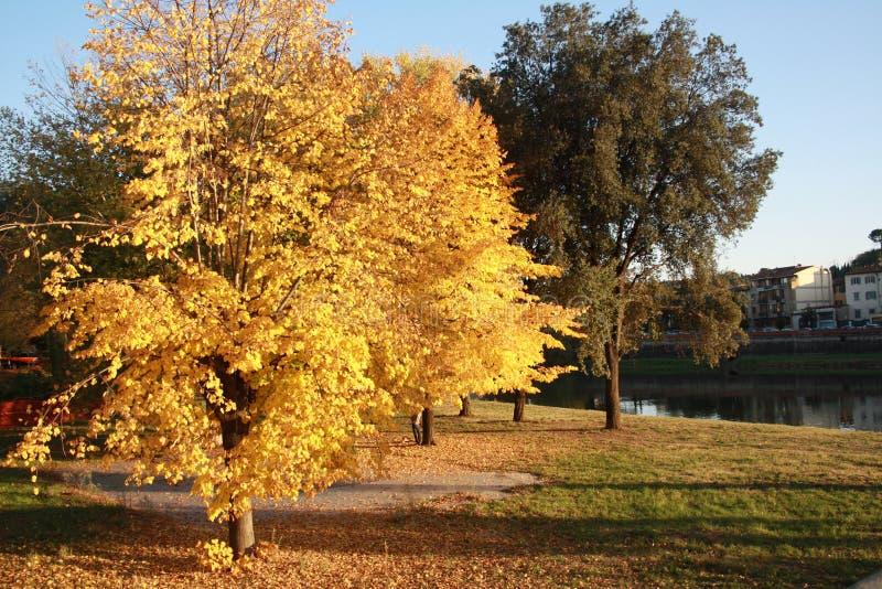 Κίτρινα και πράσινα δέντρα φθινοπώρου στη Φλωρεντία, την Ιταλία και τον ποταμό στην πίσω σκηνή στοκ εικόνα με δικαίωμα ελεύθερης χρήσης