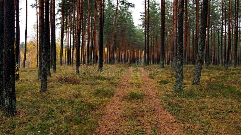 Κίτρινα και πράσινα φύλλα στοκ φωτογραφίες με δικαίωμα ελεύθερης χρήσης