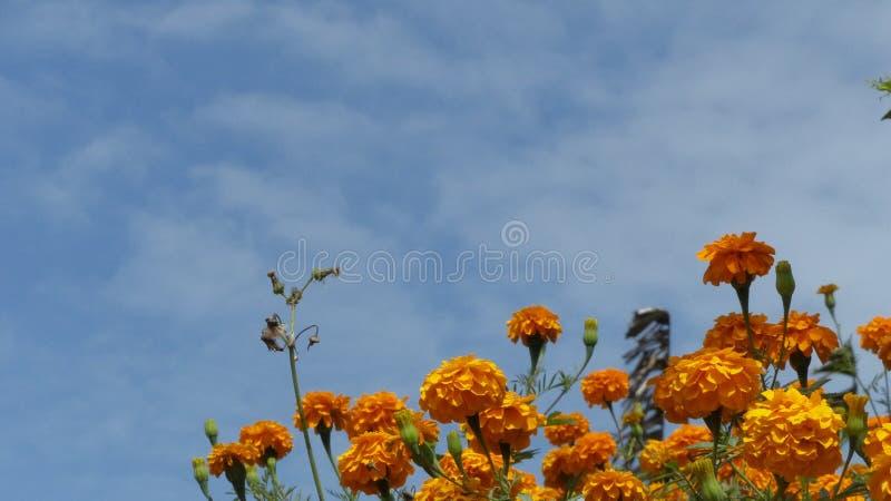 Κίτρινα λουλούδια κάτω από έναν μπλε ουρανό στοκ φωτογραφία με δικαίωμα ελεύθερης χρήσης