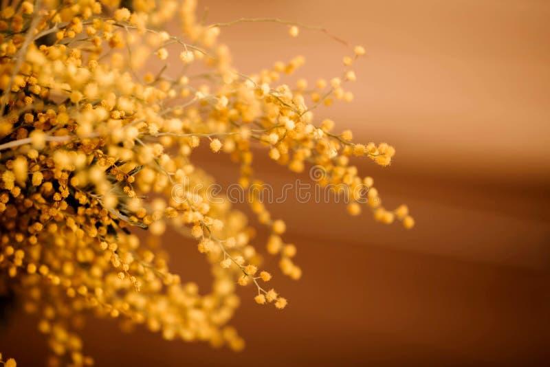 Κίτρινα λουλούδια μιας ανθοδέσμης του mimosa σε ένα μπεζ υπόβαθρο στοκ φωτογραφίες με δικαίωμα ελεύθερης χρήσης
