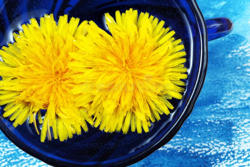 Κίτρινα λουλούδια σε ένα μπλε κύπελλο τσάι δαντέλων κίτρινο φυσικό φόντο στοκ εικόνες