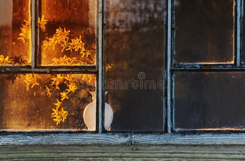 κίτρινα λουλούδια στο βάζο στο παράθυρο στοκ φωτογραφίες με δικαίωμα ελεύθερης χρήσης