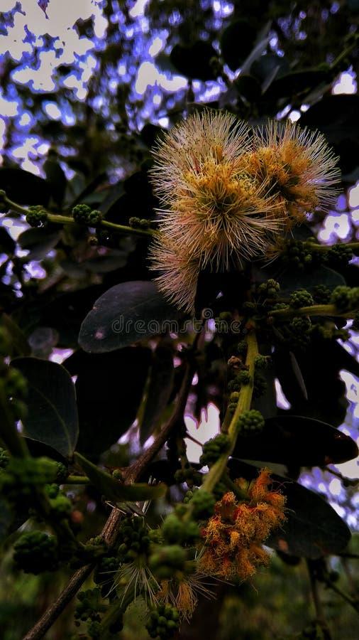 Κίτρινα λουλούδια στοκ εικόνα