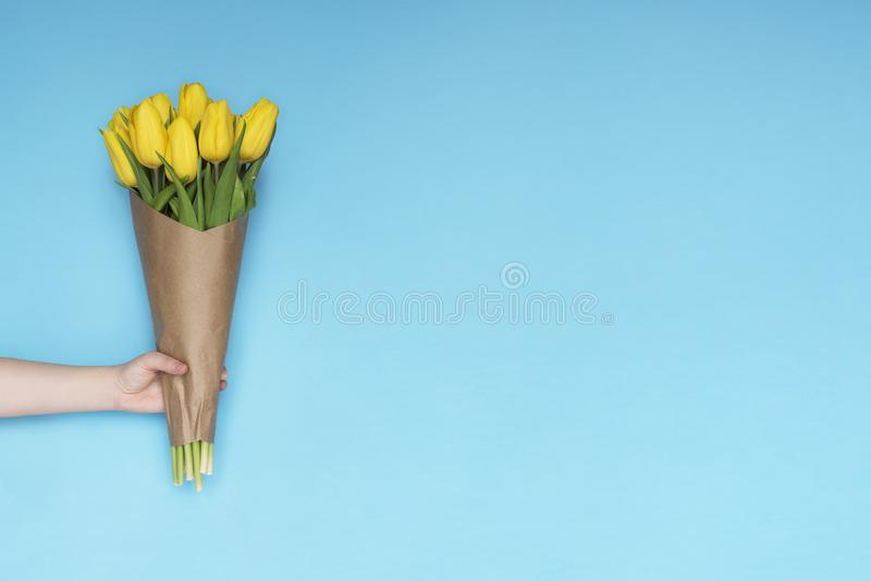 Κίτρινα λουλούδια τουλιπών ανθοδεσμών εκμετάλλευσης χεριών γυναικών στο μπλε υπόβαθρο Επίπεδος βάλτε, τοπ άποψη Υπόβαθρο λουλουδι στοκ φωτογραφία με δικαίωμα ελεύθερης χρήσης