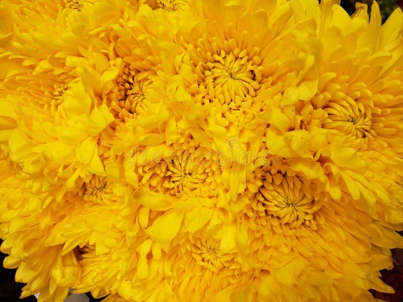 κίτρινα λουλούδια χρυσάνθεμων σε μια floral ανθοδέσμη, ένα υπόβαθρο και μια σύσταση στοκ φωτογραφία με δικαίωμα ελεύθερης χρήσης