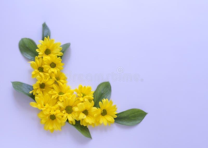 Κίτρινα λουλούδια χρυσάνθεμων στη σύνθεση σε ένα ιώδες υπόβαθρο στοκ εικόνες με δικαίωμα ελεύθερης χρήσης
