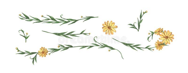 Κίτρινα λουλούδι και φύλλα καθορισμένα Σύνορα γραμμών, laurels και διαιρέτης κειμένων m ελεύθερη απεικόνιση δικαιώματος