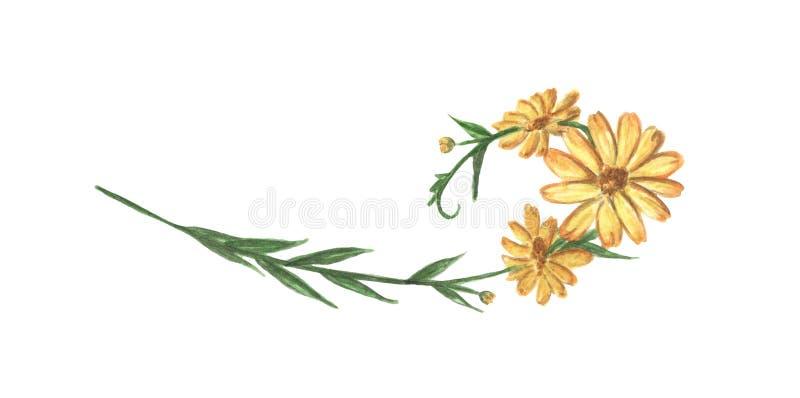 Κίτρινα λουλούδι και φύλλα Σύνορα γραμμών, laurels και διαιρέτης κειμένων m απεικόνιση αποθεμάτων