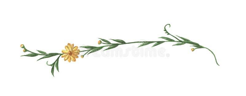 Κίτρινα λουλούδι και φύλλα Σύνορα γραμμών, laurels και διαιρέτης κειμένων m διανυσματική απεικόνιση