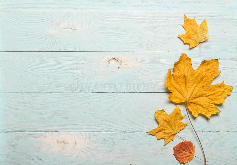 Κίτρινα ξηρά φύλλα σφενδάμου φθινοπώρου σε ένα μπλε ξύλινο υπόβαθρο r E r Έννοια φθινοπώρου στοκ εικόνα με δικαίωμα ελεύθερης χρήσης