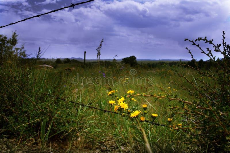 Κίτρινα λουλούδια κατά μήκος ενός οδοντωτού - φράκτης καλωδίων με έναν θυελλώδη ουρανό ανωτέρω στοκ εικόνες