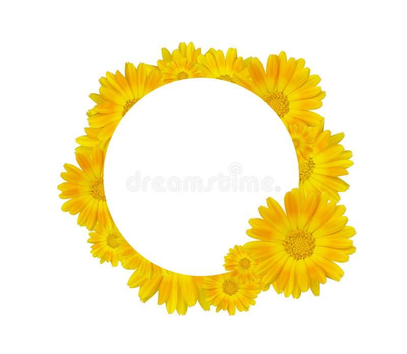 Κίτρινα λουλούδια σε έναν κύκλο στοκ εικόνες