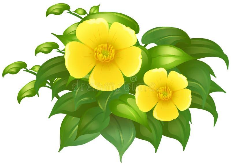 Κίτρινα λουλούδια στον πράσινο θάμνο διανυσματική απεικόνιση