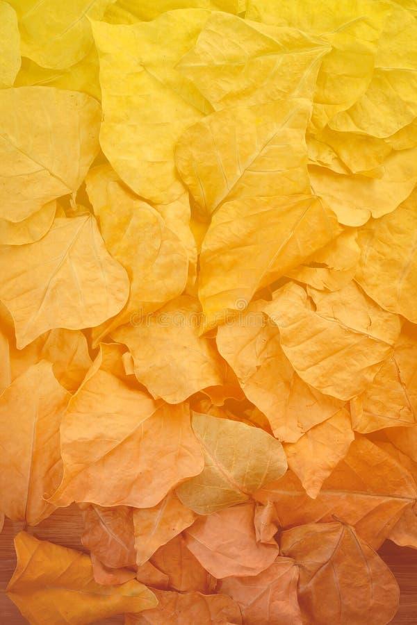Κίτρινα, πορτοκαλιά και κόκκινα φύλλα φθινοπώρου στο πάρκο πτώσης στοκ εικόνες με δικαίωμα ελεύθερης χρήσης
