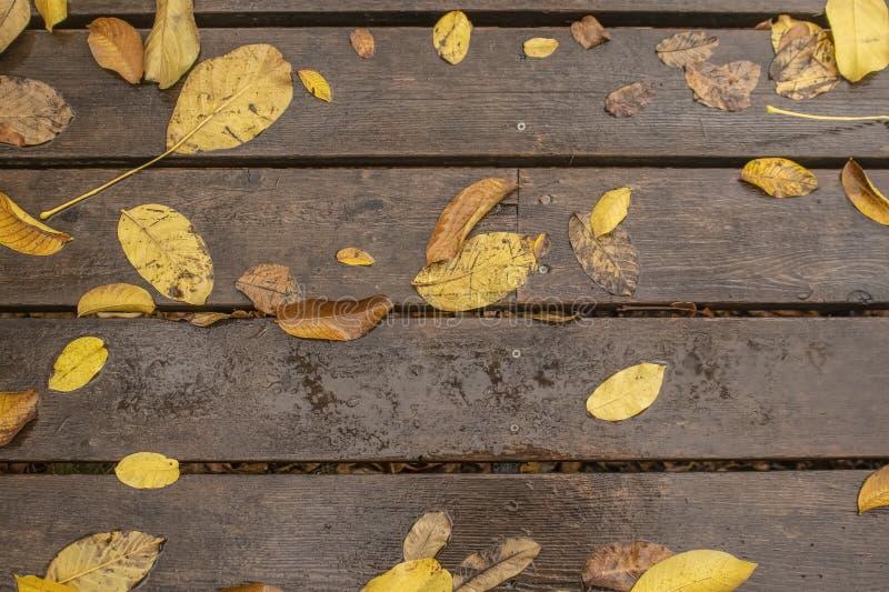 Κίτρινα φύλλα ξύλων καρυδιάς φθινοπώρου που βάζουν στο υγρό ξύλινο υπόβαθρο σανίδων στοκ εικόνες