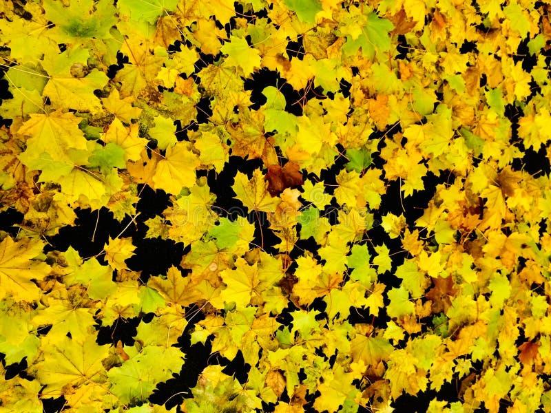 Κίτρινα φύλλα στο μαύρο υπόβαθρο στοκ εικόνα